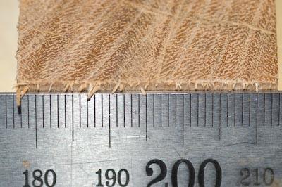Linbide 24 hardwood crosscut closeup