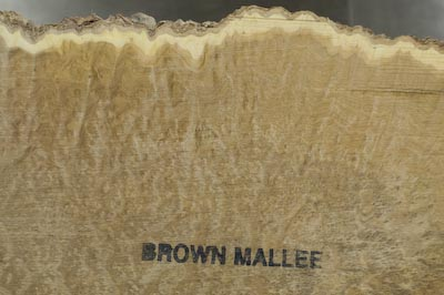 Brown Mallee Burl as-cut