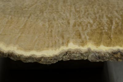 Edge of Burl